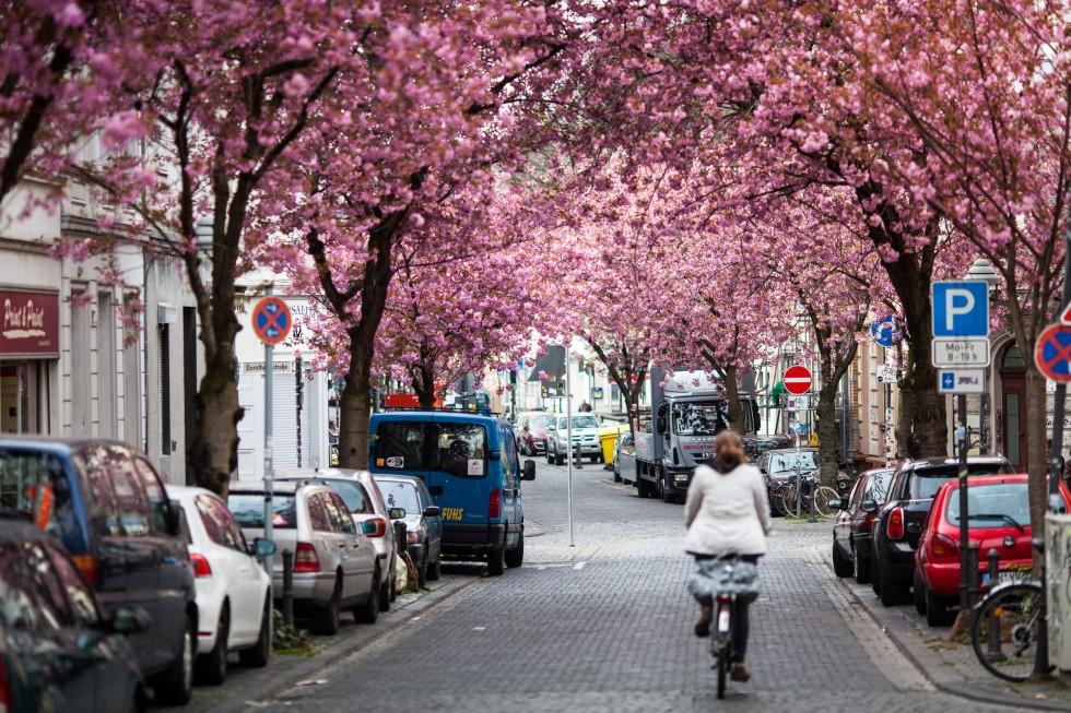 Kirschblüte-4702